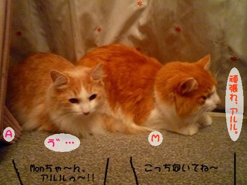 コピー ~ s-030.jpg