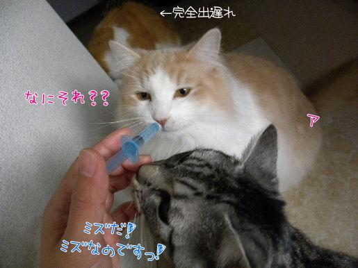 シリンジ2.JPG
