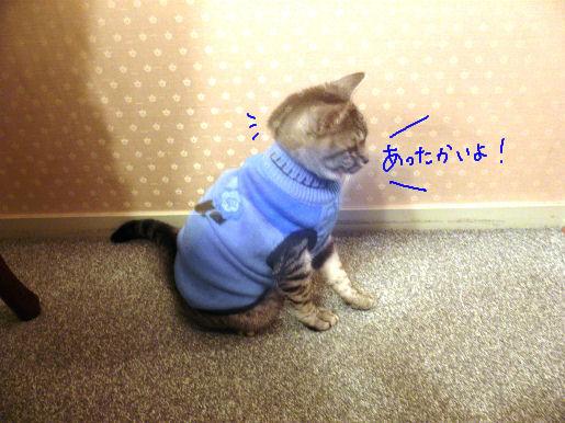 セーター暖かい.JPG