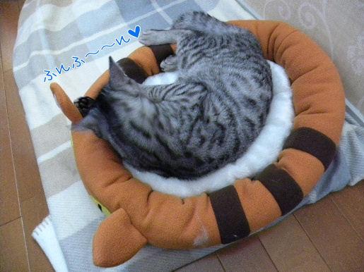 ネコベッドでウキウキ.JPG