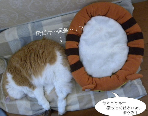 ネコベッドとモンモン.JPG