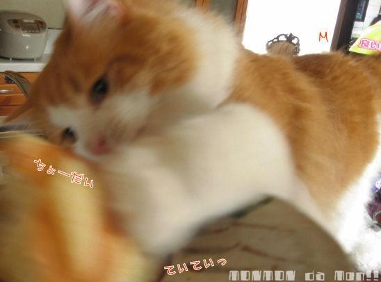 パンを攻撃!.JPG