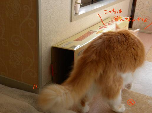 モンモンの箱活動3.JPG