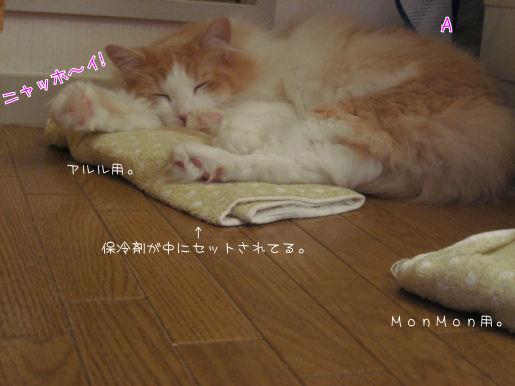 使える猫.JPG