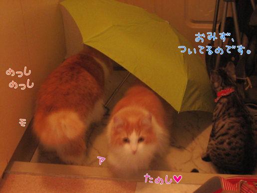 傘と3ニャン.JPG
