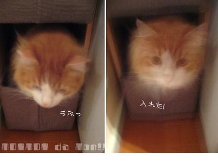 入れてうれしい!.jpg