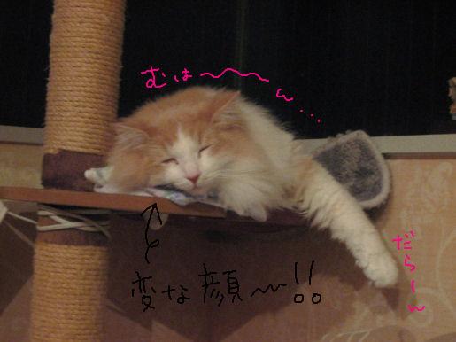 変顔寝アルル.JPG