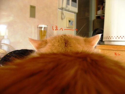 大きな猫丘.JPG