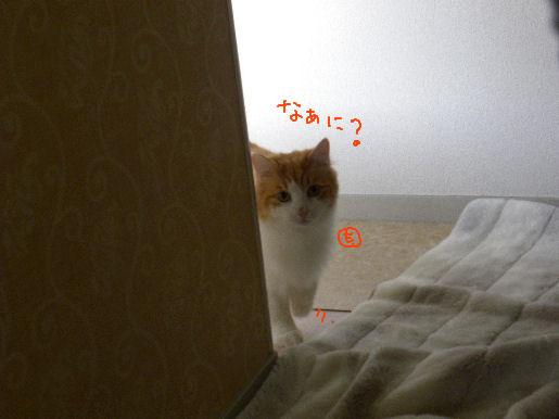 子猫!?.JPG