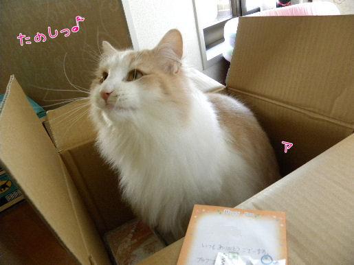 楽しい箱活動.JPG