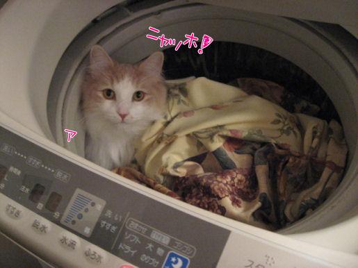 洗濯機ニャッホ.JPG