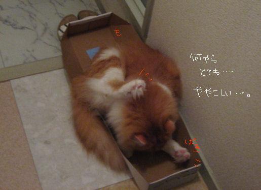 潰れてる、箱。.JPG