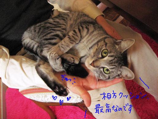 相方クッション最高.JPG
