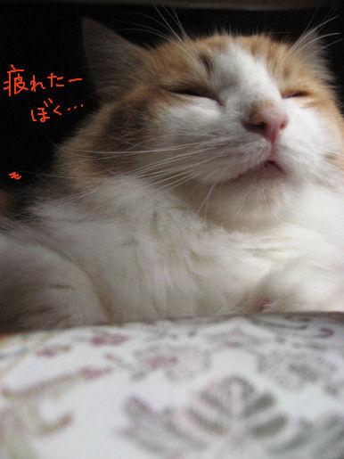 眠い.JPG