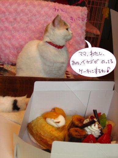 私はイチゴケーキにするわ。.JPG
