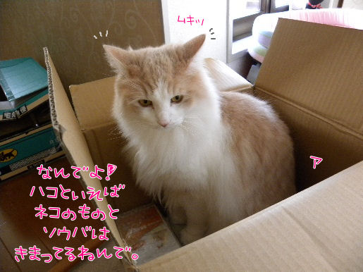 箱と言えば猫と、相場は決まってる.JPG