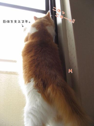 網戸VS巨体.JPG