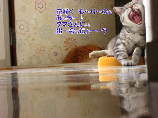 114-4くまさん.JPG