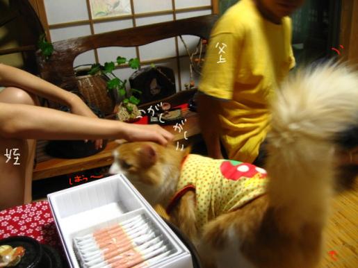 29-1 1階和室のMonちゃん.JPG