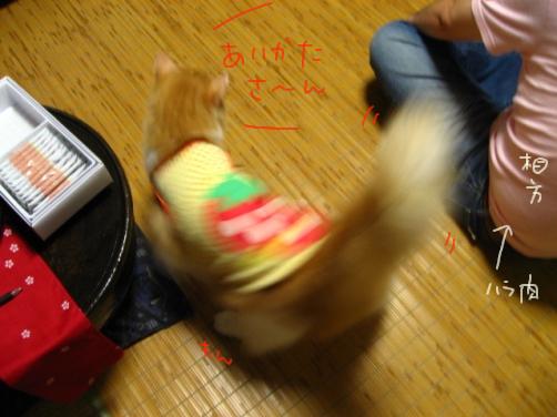 29-2 1階和室のMonちゃん.JPG