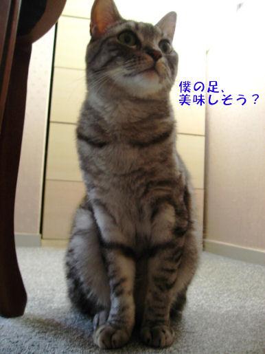 4-2おいしそう?.JPG