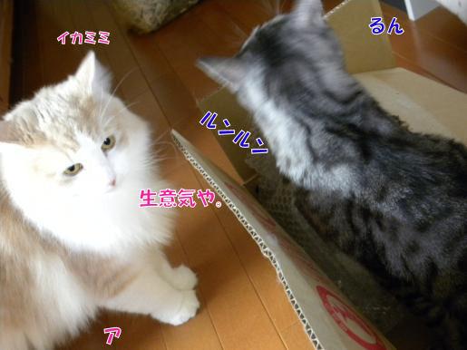 7‐7イカミミ.JPG