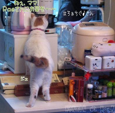 しっかり者、ジェニちゃん.JPG
