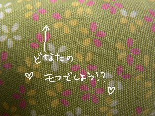 どなたかのモフ!.JPG