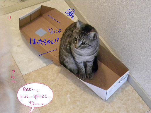 アルルは箱よりトイレ.JPG