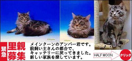 アンバー君募集!.jpg