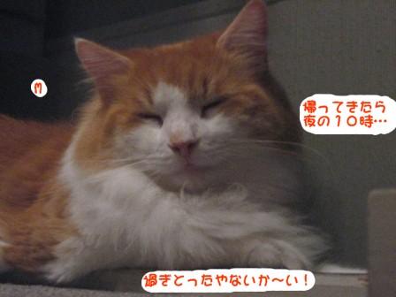 コピー ~ IMG_0073.JPG