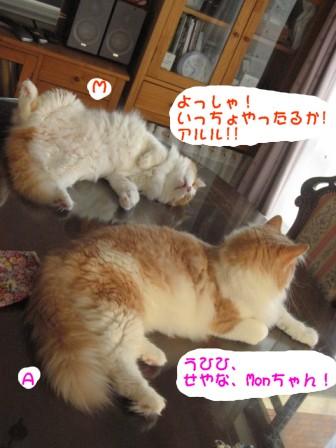 コピー ~ IMG_0650.JPG