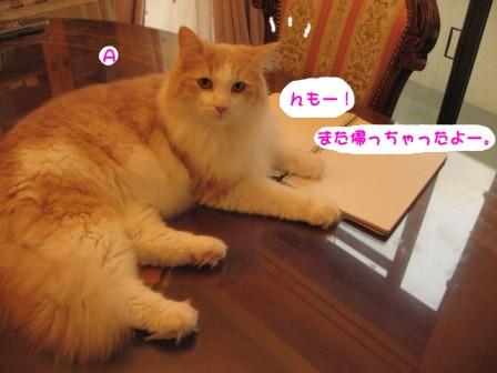 コピー ~ IMG_1055.JPG