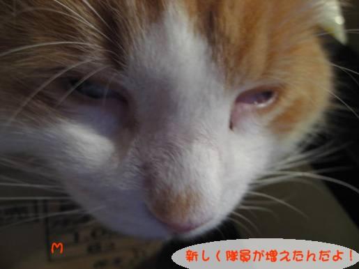 コピー ~ IMG_1398.JPG