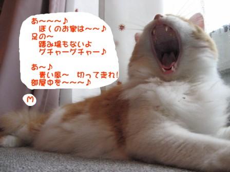 コピー ~ IMG_1812.JPG