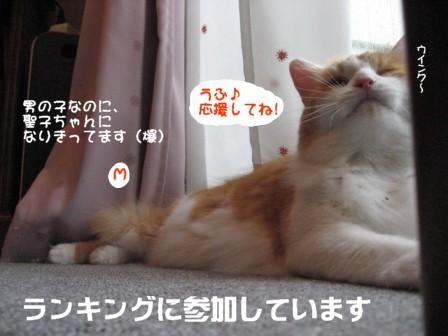 コピー ~ IMG_1815.JPG