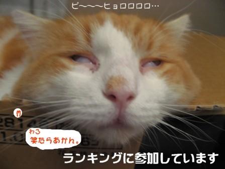 コピー ~ IMG_2306.JPG