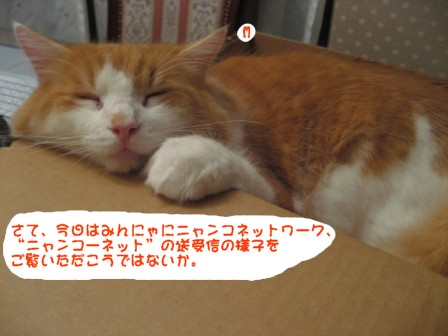 コピー ~ IMG_2309.JPG