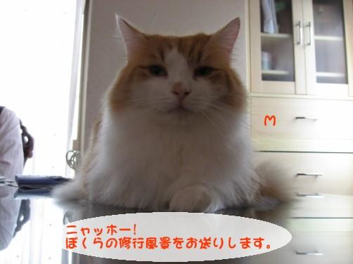 コピー ~ IMG_3031.JPG