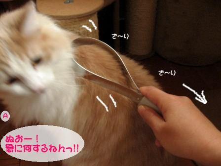 コピー ~ IMG_3091.JPG