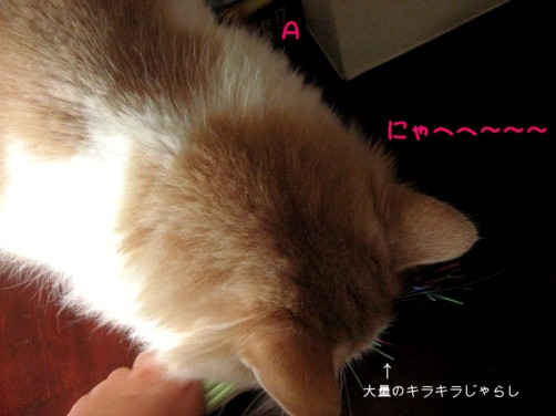 コピー ~ IMG_3102.JPG