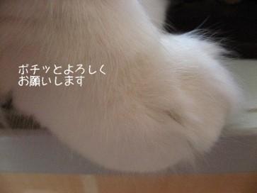 コピー ~ IMG_3740.JPG