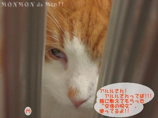 コピー ~ IMG_4107.JPG