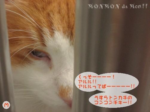 コピー ~ IMG_4109.JPG