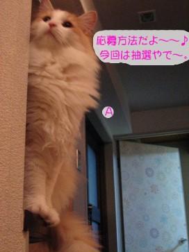 コピー ~ IMG_4177.JPG