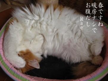 コピー ~ IMG_5006.JPG