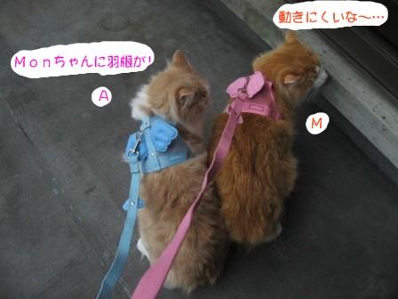 コピー ~ IMG_6348.JPG