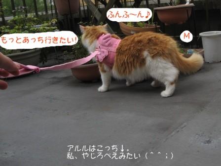 コピー ~ IMG_6355.JPG