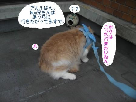 コピー ~ IMG_6358.JPG