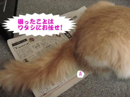 コピー ~ IMG_6947.JPG